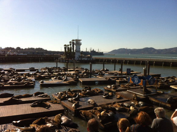 San Francisco (im Oktober): Sonniger und robbenreicher, aber viel teurer